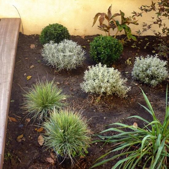 jardin petit cour