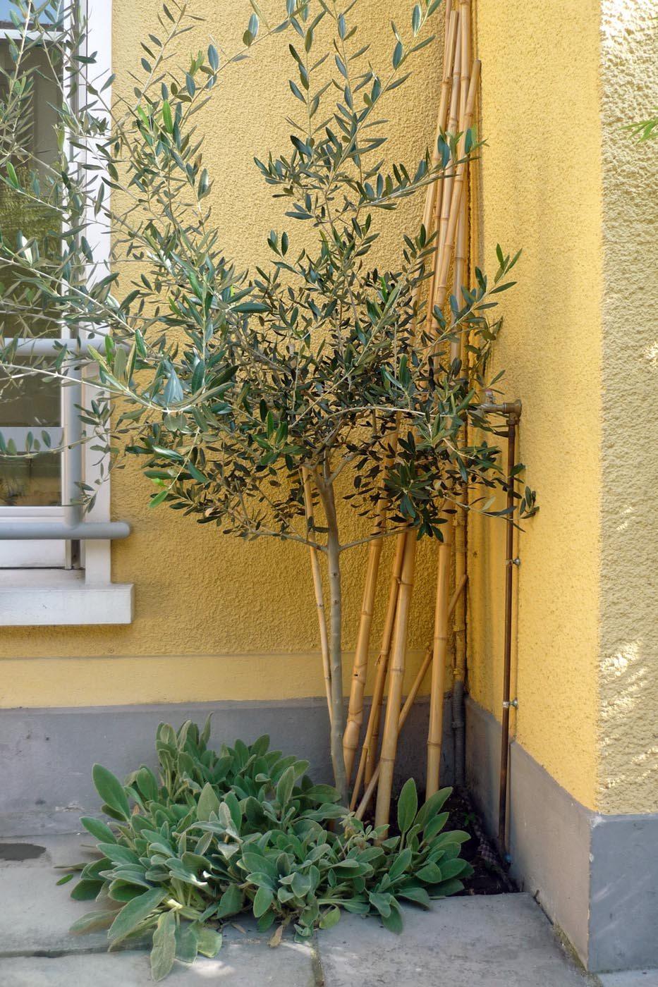 Terrasse et olivier ambiance m diterran ene jardin for Jardins et terrasses lyon